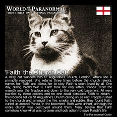 'Faith' the Church Cat   - St Augustine, Watling Street, City of London.  (Destroyed, remains now part of St Paul's Cathedral Choir School)    'World of the Paranormal' are short bite sized posts covering paranormal locations, events, personalities and objects from all across the globe!  Find more great reads at www.theparanormalguide.com