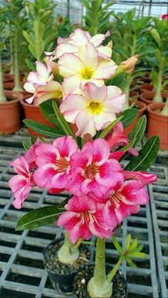 Flower Garden Images, Beautiful Flowers Garden, Rare Flowers, Exotic Flowers, Yellow Flowers, Unusual Plants, Exotic Plants, Tropical Plants, Orquideas Cymbidium