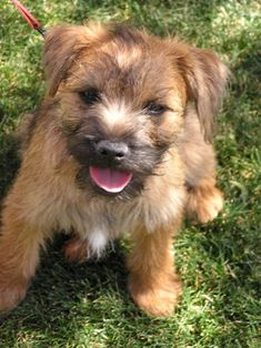 Terriers are energetic, fun loving, and playful companions. People who own terriers are said to be flexible and able to focus on the task at hand. Just like the dogs, terrier owners are often feisty, brave, and competitive. They are extremely talkative and have good sense of humor.