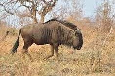 Madikwe Game Reserve, North West, South Africa   by South African Tourism