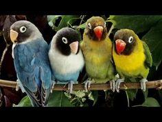 Las Aves Mas Hermosas Del Mundo - HD - Alta Definicion - YouTube