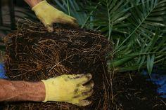 """""""l'entretien"""" de vos plantes chez vous I Shop, Herbs, Interview, Plants, Herb, Medicinal Plants"""
