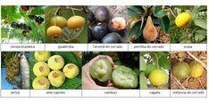 Não espere encontrar as frutas da fotografia acima nos supermercados. Conforme exposto no Blog ano passado, das 20 frutas mais comercializadas no Brasil, apenas 3 são nativas de nosso país, e atu…