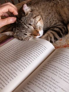 Happiness is a purring cat to pet and a book to read