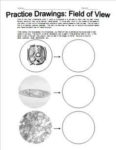 ecological succession worksheet 7th impacting earth systems pinterest ecological. Black Bedroom Furniture Sets. Home Design Ideas