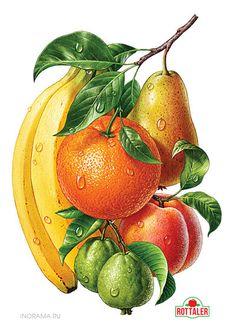 ilustrações realistas de frutas
