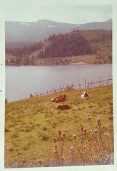 """""""I…am in love with this photo. """" My mother took this photo somewhere in Norway, summer of """" Peach Lemonade, Rock You Baby, Am In Love, A Whole New World, Natural Life, Wild And Free, Pink Floyd, Vintage Photography, Vintage Photos"""