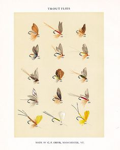 C. F. Orvis Fly Fishing print with flies for Trout anglers 1955 print from 1892 chromolithograph