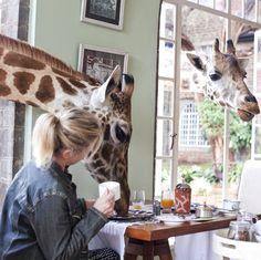 Giraffe Manor #Kenya