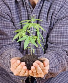 7 Tips for growing great weed indoors. Master the art of growing your own marijuana with an indoor growing operation.