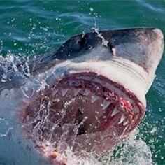 Shark Week | Discovery Starts tonight 082915