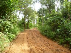 Into the forest where the ellies sleep Elephants, Laos, Country Roads, Sleep, Elephant, Catfish