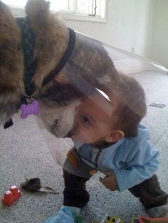 This dog that will embrace the cone of shame to have secret meetings with the tiny human. Cute puppies and adorable kids. I Love Dogs, Puppy Love, Animal Pictures, Cute Pictures, Baby Pictures, Random Pictures, Baby Animals, Cute Animals, Funny Animals