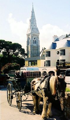 Jaunting Cart in Killarney - Killarney, Kerry, Ireland