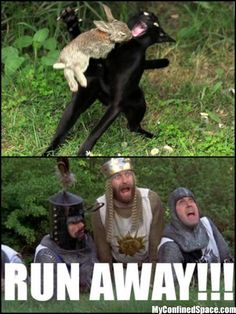 RUN AWAY!!!!!!!!!!!!! Monty Python and the Holy Grail
