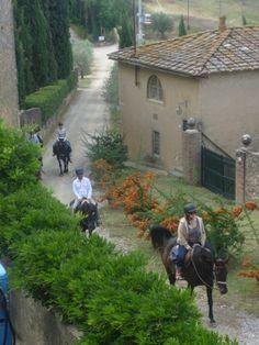 #tuscany #horses