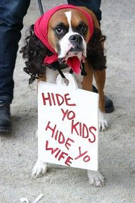 Dog costume.  Hilarious