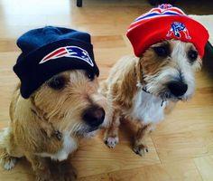 Edelman & Amendola #PETriots #Patriots