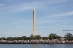 Fashion Friday: Cherry Blossom Festival - Washington DC   CBBlogers