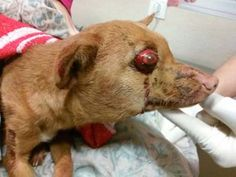 Justice For Iris! Severely Beaten, Tossed In A Bad And Dumped In a Garbage Container To Perish!   PetitionHub.org