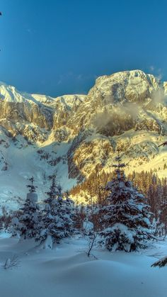 Download Wallpaper 720x1280 Winter, Mountains, Austria, Snow, Trees, Spruce, Alps, Nature Samsung Galaxy S3 HD Background
