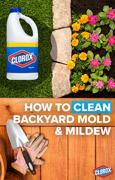 Clorox® Regular-Bleach makes outdoor mold and mildew removal easy. Before starting, always be sure to thoroughly water any plants near the area where you will be working. Protect larger plants by covering them with plastic sheeting. Click to learn more.