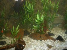 Cheap Artificial Aquarium Plants