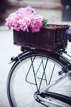 Pink peonies in bicycle basket.
