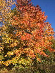 Nice gradation colors, USA autumn.