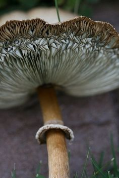 Art in Nature - Mushroom with ripples & fine textures; organic inspiration for design