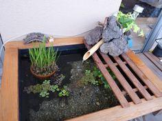 こんにちは、ニートです。ついに秋が来ましたね、行楽の秋です。だいぶ涼しくなってきましたが直射日光が刺さるように強い秋でもあります。そんな中、皆さんのビオト... La Reverie, Turtle Habitat, Container Water Gardens, Pond Fountains, Modern Patio, Habitats, Outdoor Living, Aquarium, Deco