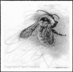 April Coppini Charcoal drawings https://clothandgoods.com/items.php?CID=12