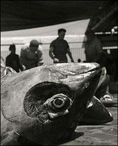 Tuna Catch, Favignana, Sicily, Italy, 1951 by Herbert List History Of Photography, Modern Photography, Artistic Photography, Black And White Photography, Street Photography, Food Photography, Herbert List, Double Exposition, Magnum Photos