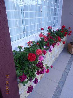 Floreira da minha sala | Flickr – Compartilhamento de fotos!