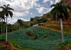Foto: Ismael Francisco — in Cienfuegos, Cuba.