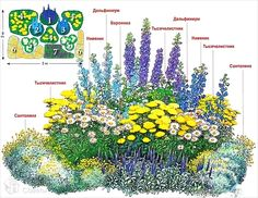 Flower Border (Better Homes and Gardens, March Planting Shrubs, Planting Plan, Landscaping Plants, Garden Plants, Landscaping Ideas, Perennial Garden Plans, Flower Garden Plans, Creative Landscape, Garden Landscape Design