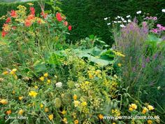 images about Beautiful Edible Landscapes and Gardens