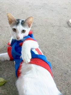 Captain mooping kitty cat
