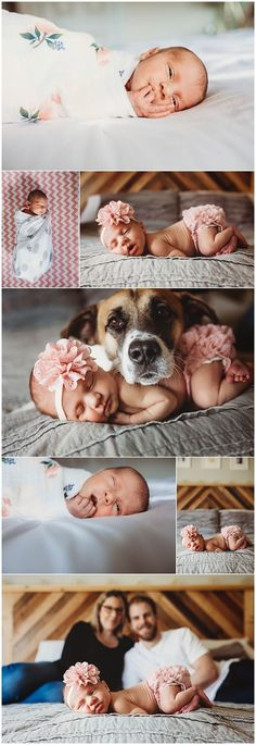 In home newborn session, baby and dog, cutest ever! In home newborn session, baby and dog, cutest ever! Newborn And Dog, Foto Newborn, Newborn Baby Photos, Newborn Poses, Newborn Session, Baby Girl Newborn, Newborn Girl Pictures, Maternity Pictures, Baby Dogs