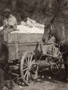 ca. 1930. Near The Cotton Gin. Doris Ulmann (United States, New York, New York City, 1882-1934). Courtesy: The Los Angeles County Museum of Art, Los Angeles, CA (USA).www.lacma.org