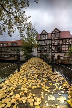 End of autumn, Erfurt / Germany (by Helmut Hess).  - See more at: http://visitheworld.tumblr.com/tagged/deutschland#sthash.v2kmKuOD.dpuf