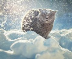 Discover The Russian Blue Cats - Cat's Nine Lives Smiling Animals, Happy Animals, Animals And Pets, Cute Animals, Crazy Cat Lady, Crazy Cats, Photo Chat, Russian Blue, Tier Fotos