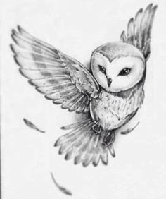 Grey Ink Flying Owlet Tattoo Design