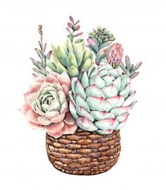 Succulents Drawing, Watercolor Succulents, Watercolor Cactus, Cacti And Succulents, Succulents Painting, Cactus Art, Cactus Flower, Watercolor Paint Set, Watercolor Paintings
