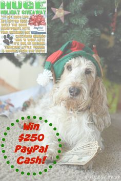My GBGV Life   Huge Holiday Cash Giveaway! Who doesn't need some extra cash this time of year? Enter to win $250 in PayPal Cash! December 14th - December 21st, 2015! Happy Howlidays!