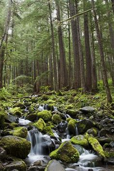 Sol Duc Valley of Olympic National Park, Washington State,...