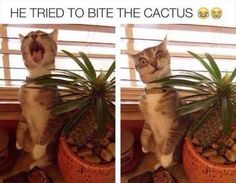 Funny Animal Memes, Funny Animal Pictures, Cute Funny Animals, Funny Cute, Cute Cats, Funny Memes, Funny Pics, Funniest Animals, Funny Humour