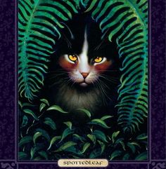 Spottedleaf--beautiful dark tortoiseshell she-cat with a distinctive dappled coat.