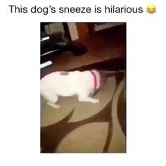 Funny Dog Memes, Funny Video Memes, Funny Animal Memes, Funny Animal Videos, Cute Funny Animals, Cute Baby Animals, Funny Dogs, Funny Videos, Stupid Videos