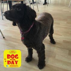 Bonnie Great Yarmouth, Dog Friends, Dog Days, Dogs, Animals, Animaux, Doggies, Animal, Animales